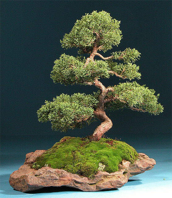 bonsai japanese art