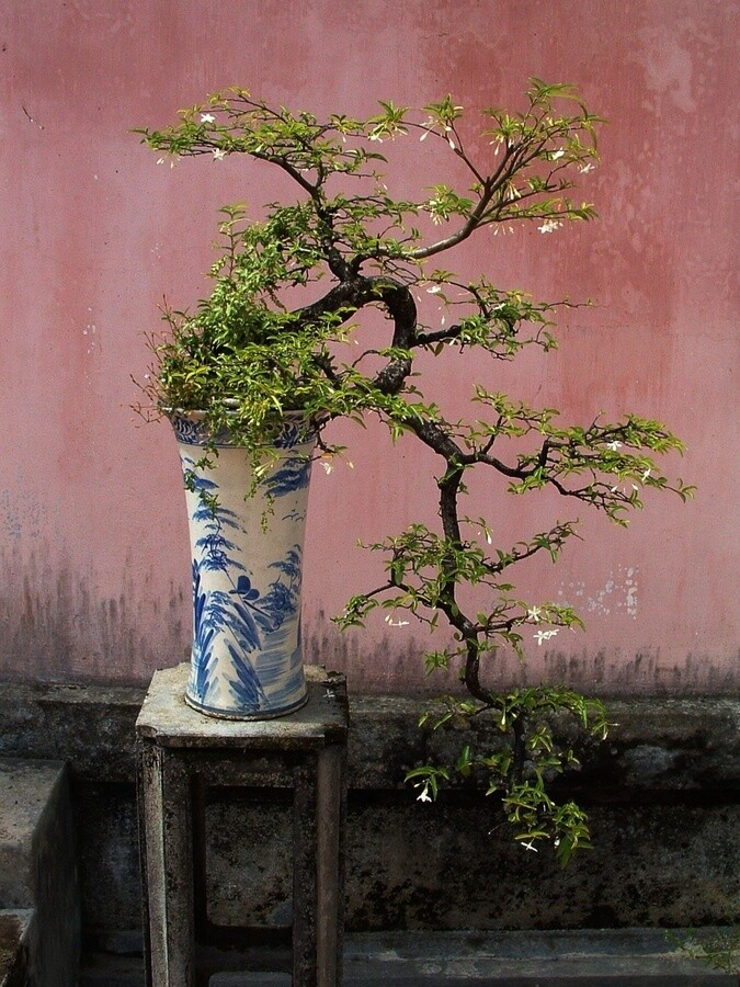 Bonsai – a visual little miracle by Japanese art
