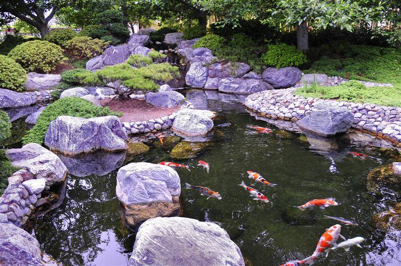 Japanese garden spiritual refuge designed for for Koi pond japan