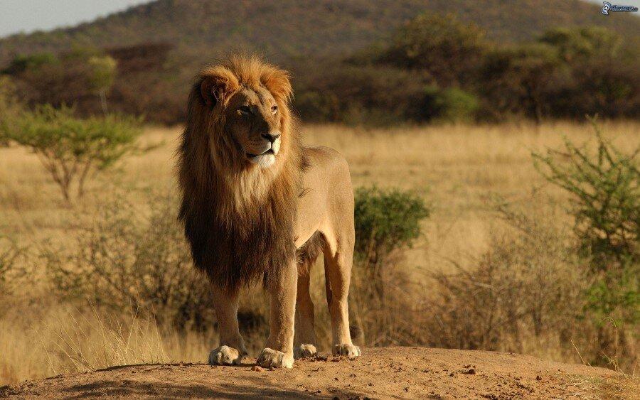 7294edae Lion Safari Park by Archohm Design Studio
