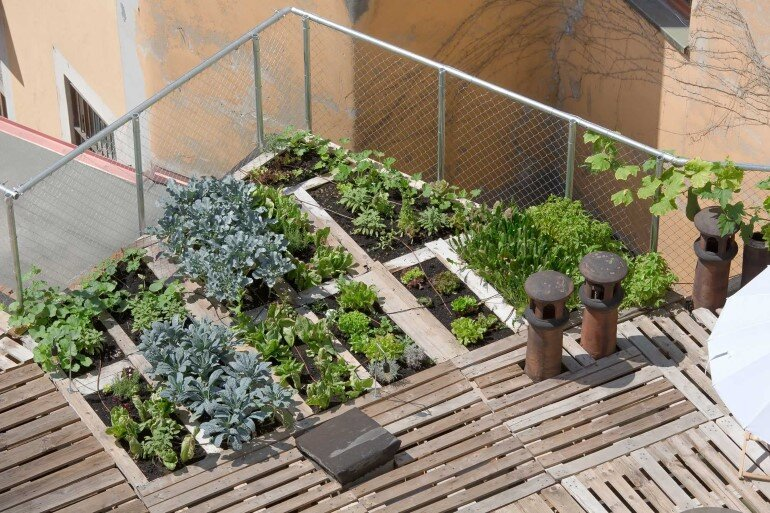 Piuarch Studio Has Converted its Rooftop into a Permanent Vegetable Garden (3)
