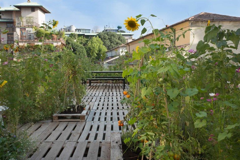 Piuarch Studio Has Converted its Rooftop into a Permanent Vegetable Garden (8)