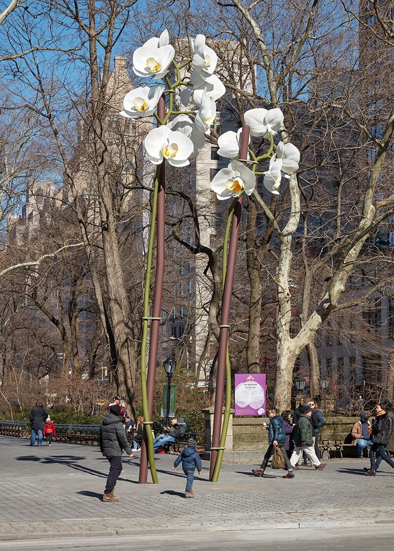 Two Orchids Herald the Entrance to Central Park in New York (2)