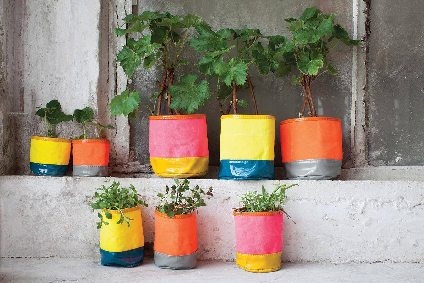 Flower pots can transform any garden or interior