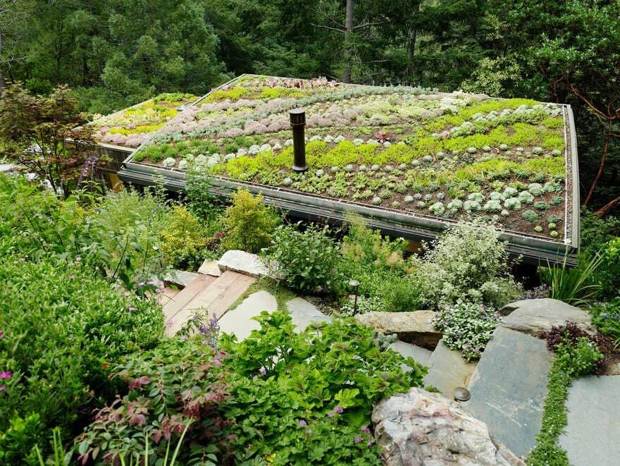 green roof, California / Feldman Architecture